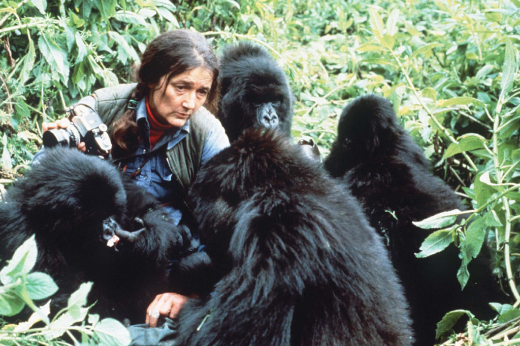 Nos amis les animaux. - Page 6 Dian-fossey-1024x683