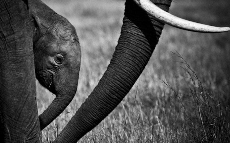 ELEPHANT-BAHEUX-0052