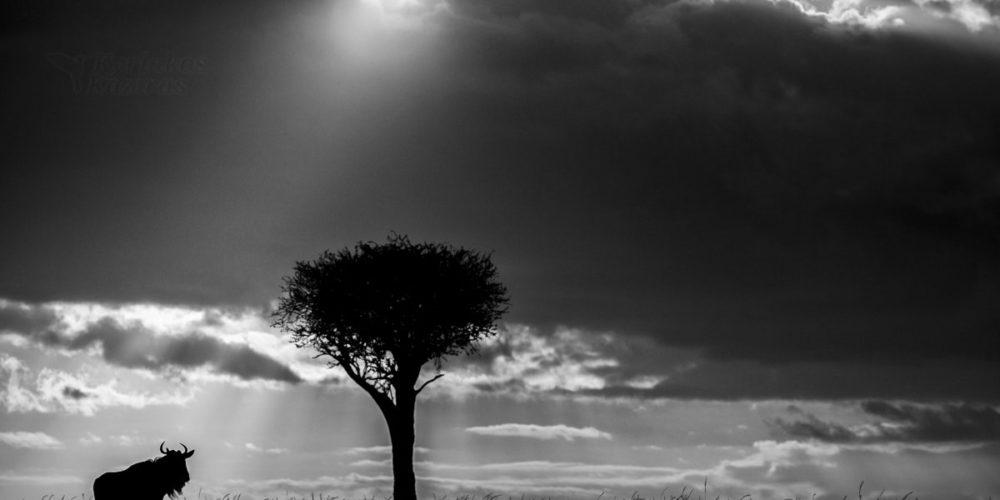 Kaziras_African_Dream-African_Shadows_VI