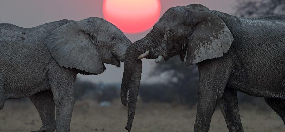 Elephant-63-1