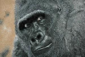le-gorille