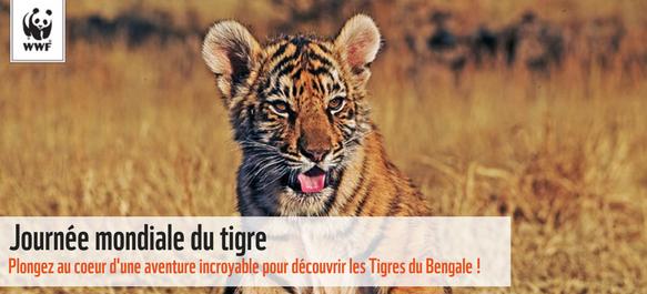 """Résultat de recherche d'images pour """"journée mondiale du tigre"""""""