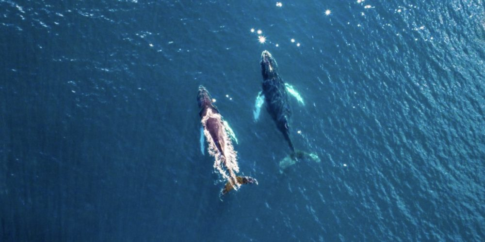Ledoux baleines