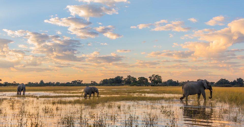 elephants-okavango-delta-botswana