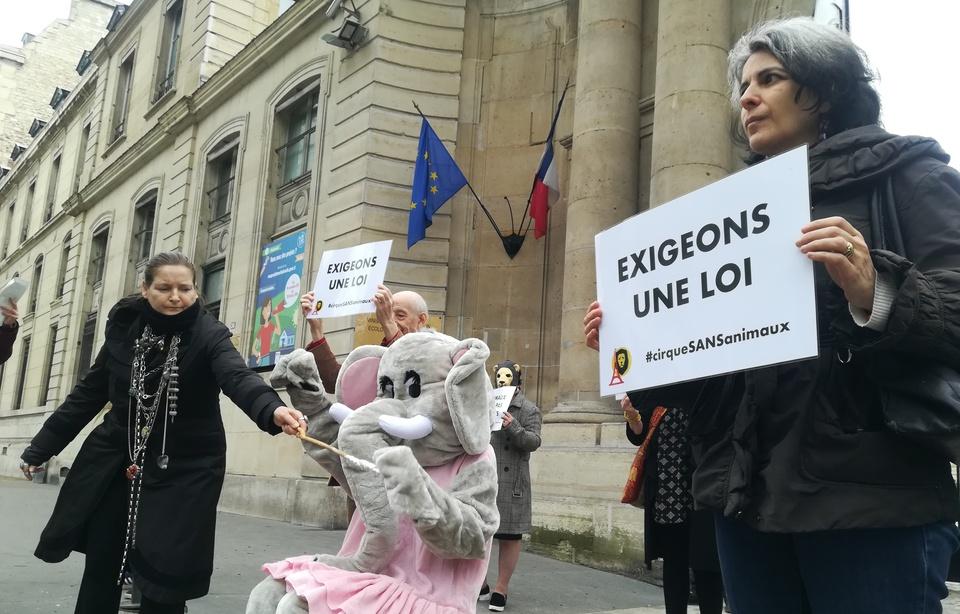 Paris des animaux sauvages manifestent devant le for Derniere volonte devant le miroir
