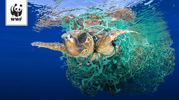 """La Méditerranée, bientôt une """"mer de plastique"""" ? - Faune ..."""
