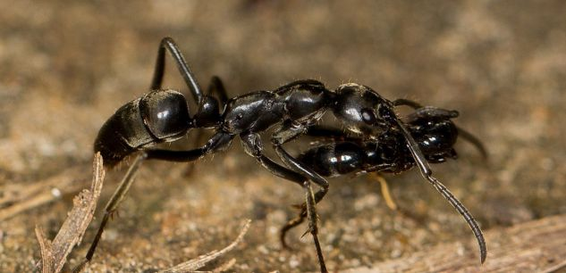 comment font les fourmis pour se soigner se gu rir et ne pas vieillir faune sauvage. Black Bedroom Furniture Sets. Home Design Ideas