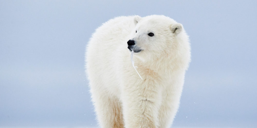 Alaska2013_D4S4661