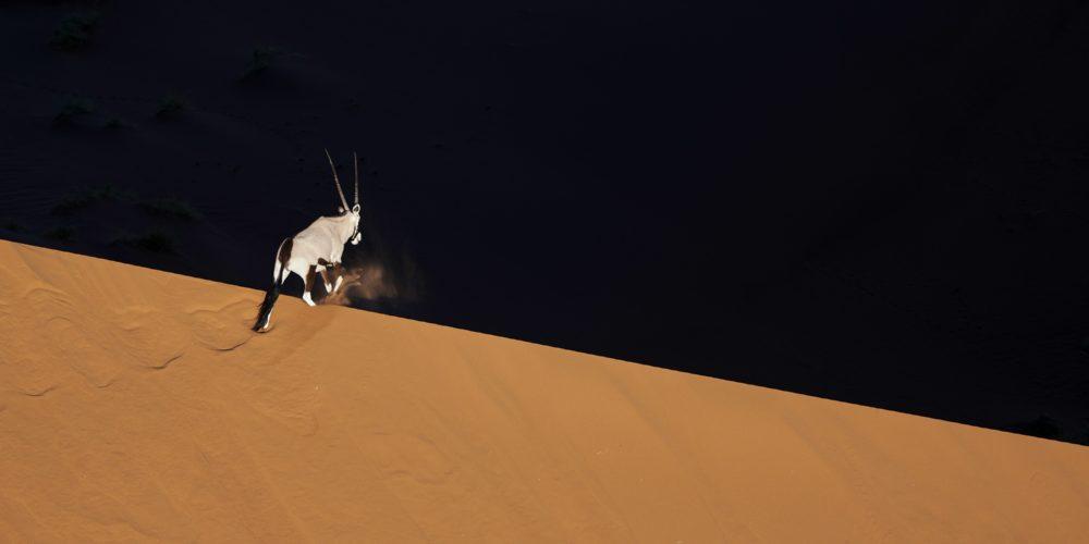 Eric le Go - Oryx